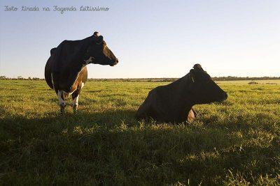 duas-vacas-na-fazenda-leitissimo