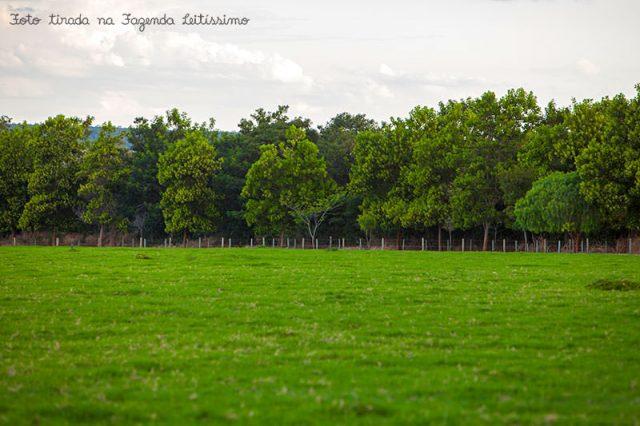 pasto-na-fazenda-leitissimo-1286