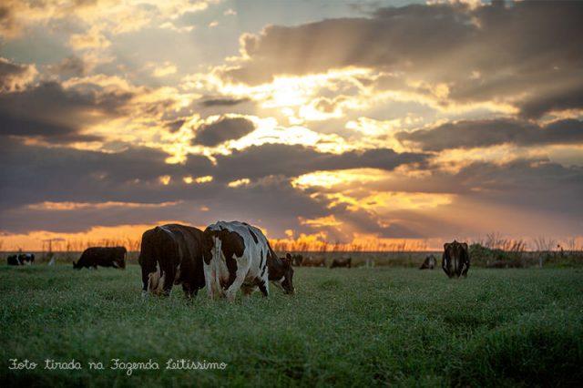 sunset-pasto-fazenda-leitissimo-8117