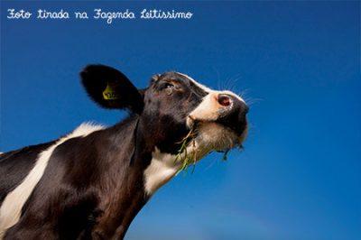 vaca-leitissimo-ceu-azul
