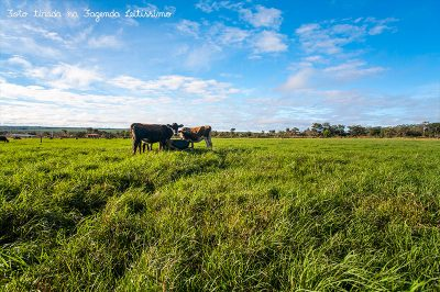 vacas-bebendo-agua-na-fazenda-leitissimo-1663